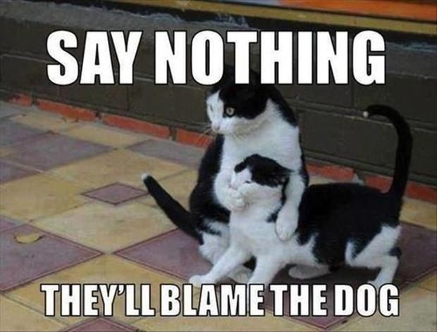 Say nothing, they'll blame the dog Picture Quote #1