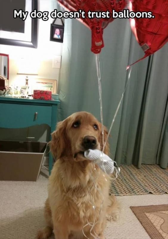 My dog doesn't trust balloons Picture Quote #1