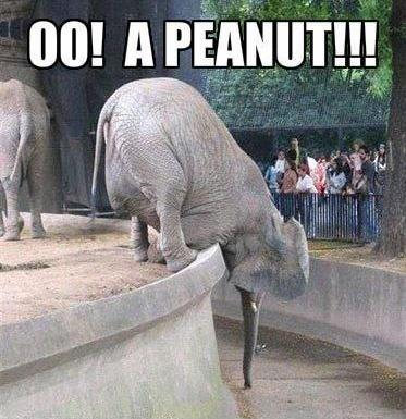 Oo! A Peanut! Picture Quote #1