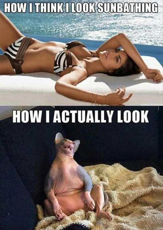 How I think I look sunbathing. How I actually look Picture Quote #1