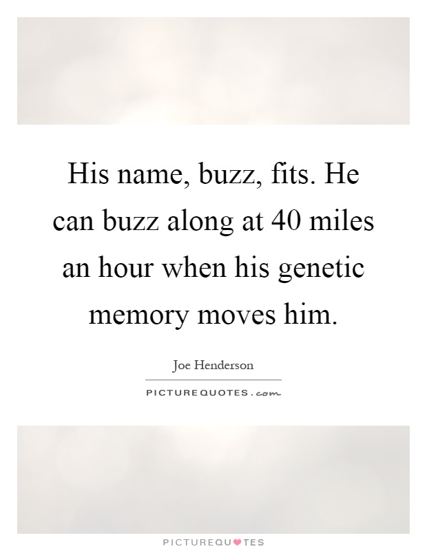 His name, buzz, fits. He can buzz along at 40 miles an hour when his genetic memory moves him Picture Quote #1