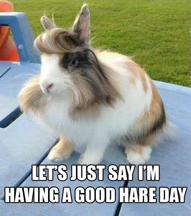 Let's just say I'm having a good hare day Picture Quote #1