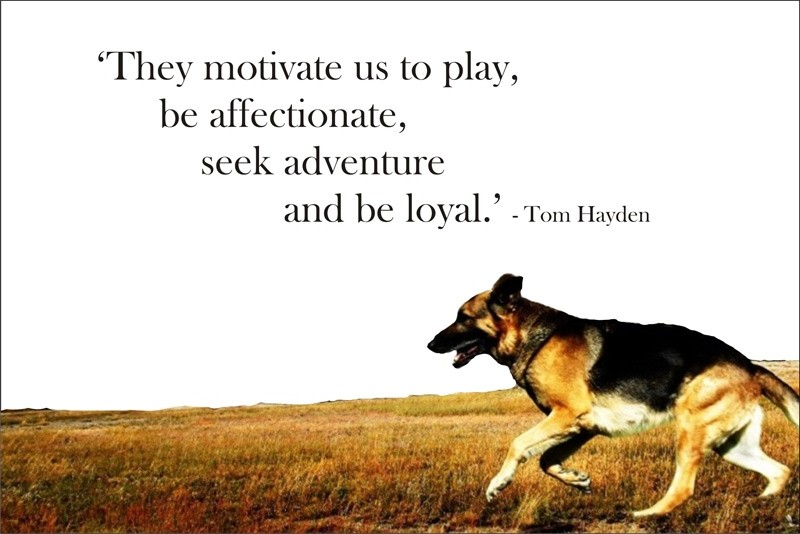 Dog Quote Picture Quote #1