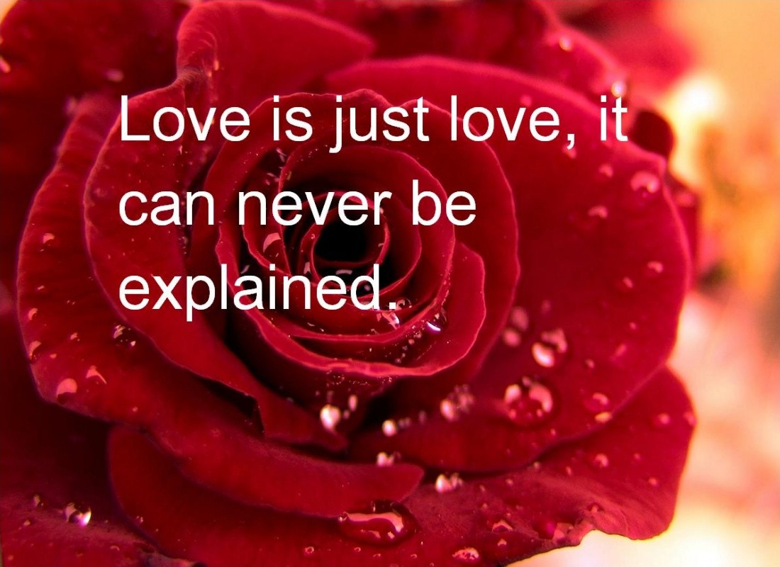 Valentines Quote Happy Valentines Day Quotes & Sayings  Happy Valentines Day
