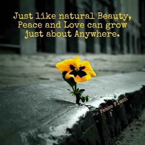 Nature Quote Picture Quote #1