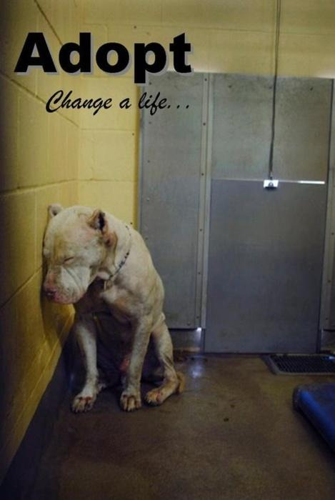Adopt. Change a life Picture Quote #1