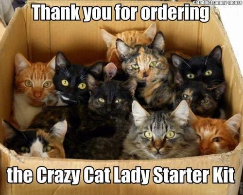 Thank you for ordering the crazy cat lady starter kit Picture Quote #1