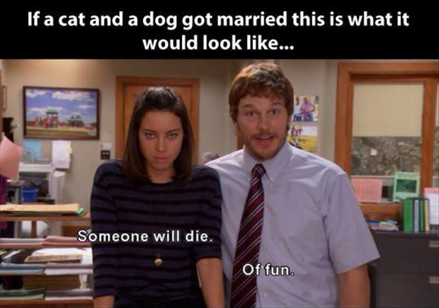 If a cat and a dog got married this is what it would look like. Someone will die. Of Fun Picture Quote #1