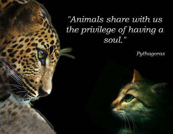 Animal Quote Picture Quote #1