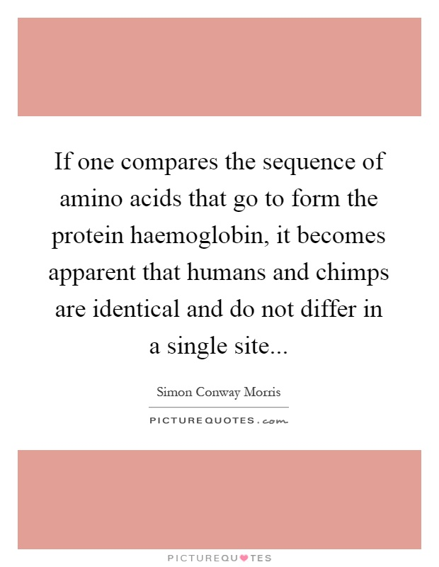 If one compares the sequence of amino acids that go to form the protein haemoglobin, it becomes apparent that humans and chimps are identical and do not differ in a single site Picture Quote #1
