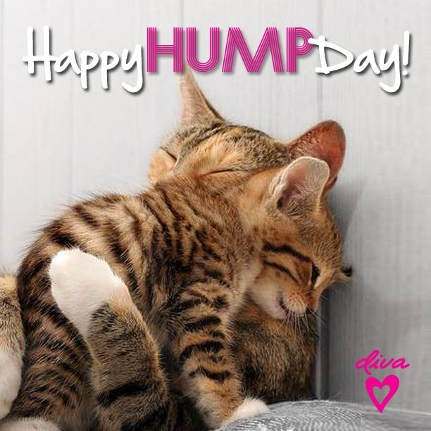 happy hump day funny quote quote number picture quotes