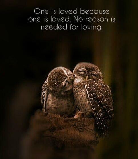 One is loved because one is loved. No reason is needed for loving Picture Quote #1