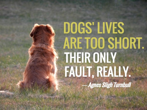 Dog Death Quote 1 Picture Quote #1