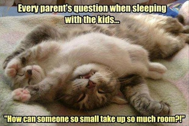 Parenting Quote About Toddlers 1 Picture Quote #1