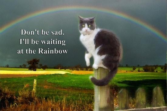 Cat Sympathy Quote 3 Picture Quote #1