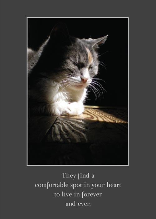 Cat Sympathy Quote 4 Picture Quote #1
