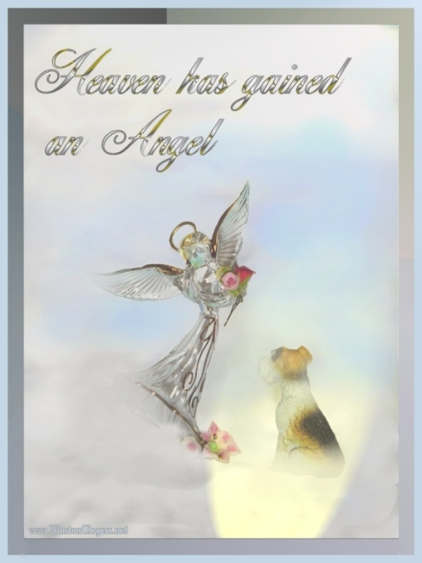 Lost Of Pet Sympathy Quote 2 Picture Quote #1