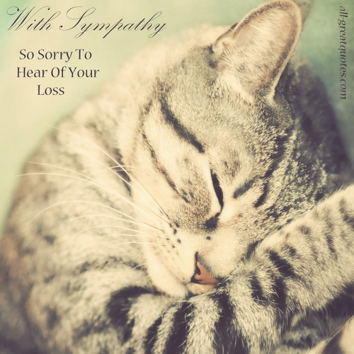 Sympathy Quote Loss Of Cat | Quote Number 561650 | Picture ...