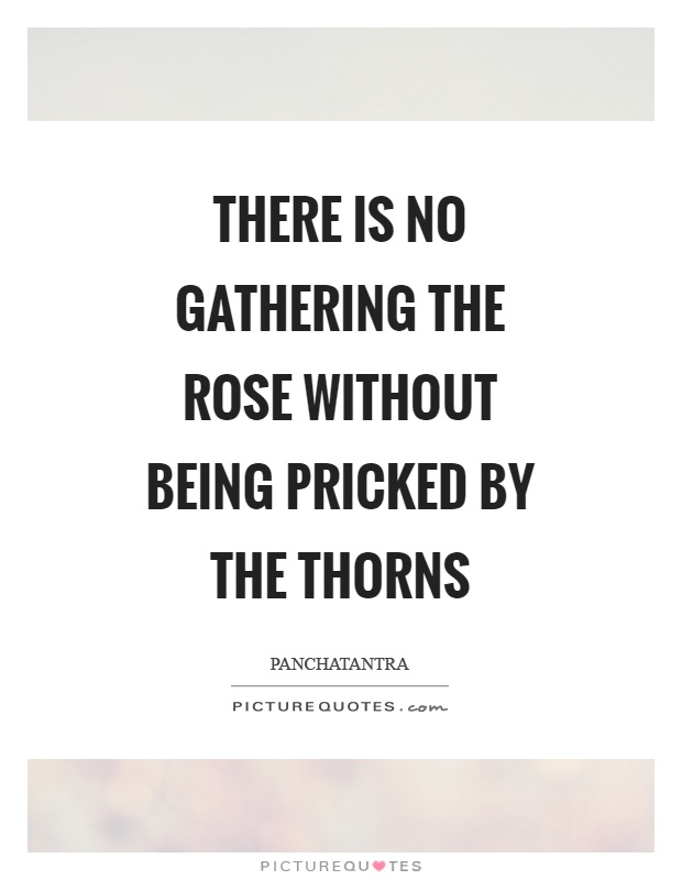 There is no gathering the rose without being pricked by the thorns Picture Quote #1
