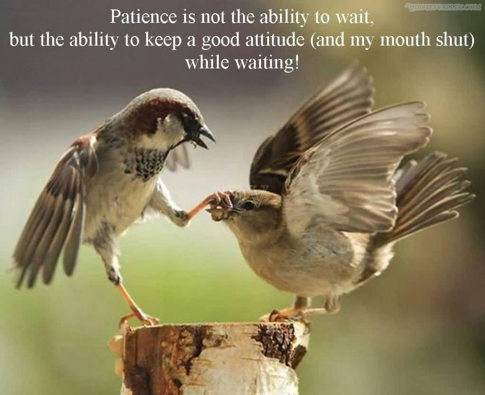 Patience Quote 1 Picture Quote #1