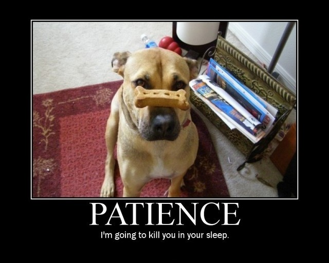 Losing Patience Quote 1 Picture Quote #1