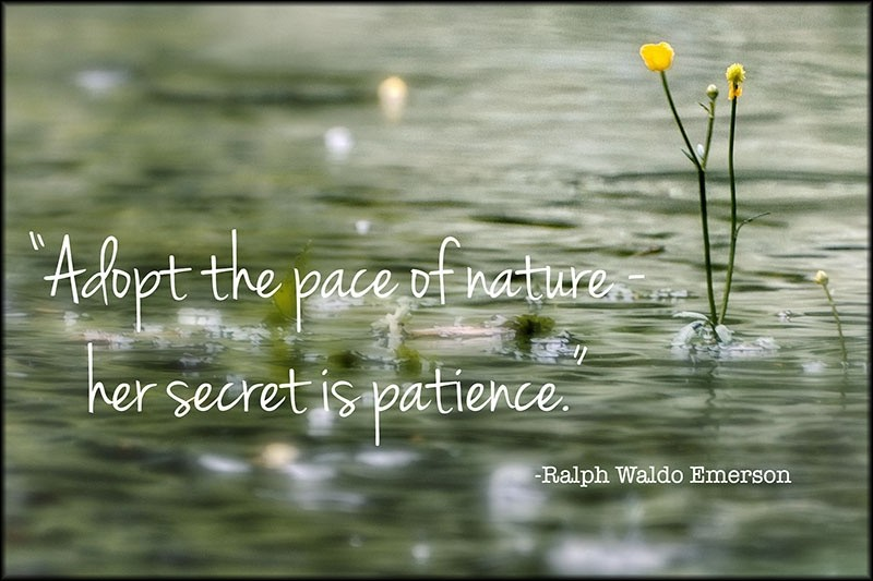 Patience Quote 13 Picture Quote #1