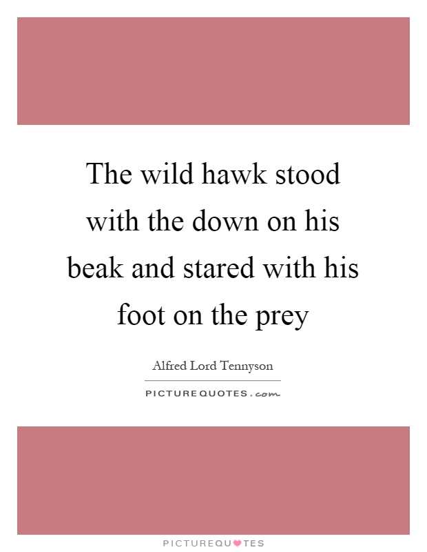 The wild hawk stood with the down on his beak and stared with his foot on the prey Picture Quote #1
