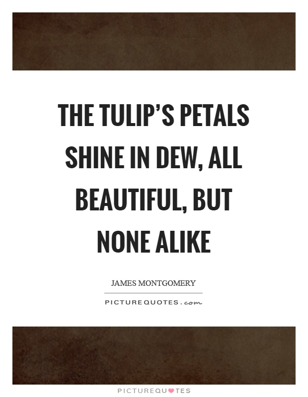 The tulip's petals shine in dew, all beautiful, but none alike Picture Quote #1