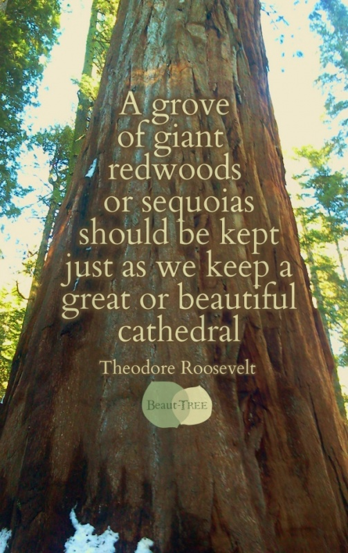 Tree Nature Quote 1 Picture Quote #1