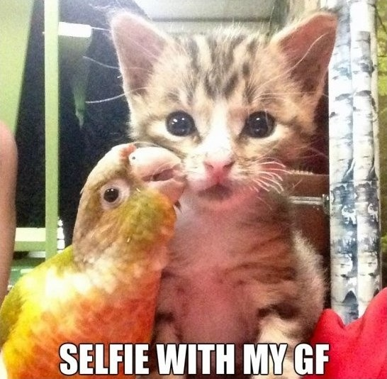 Best Selfie Quote 2 Picture Quote #1