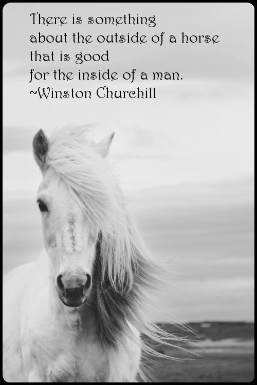Horse Quotes | Horse Sayings | Horse Picture Quotes