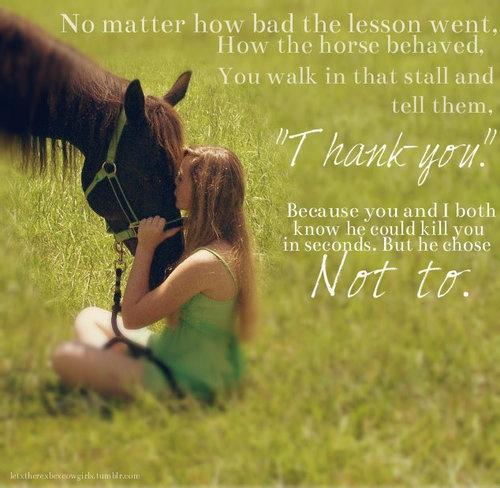 Horse Quote 1 Picture Quote #1