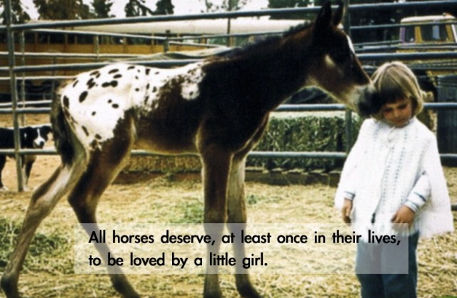Cute Horse Quote 4 Picture Quote #1
