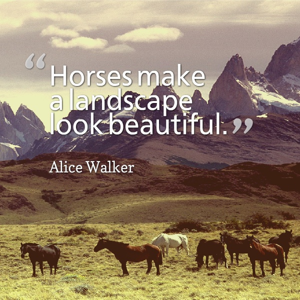 Horse Quote 8 Picture Quote #1