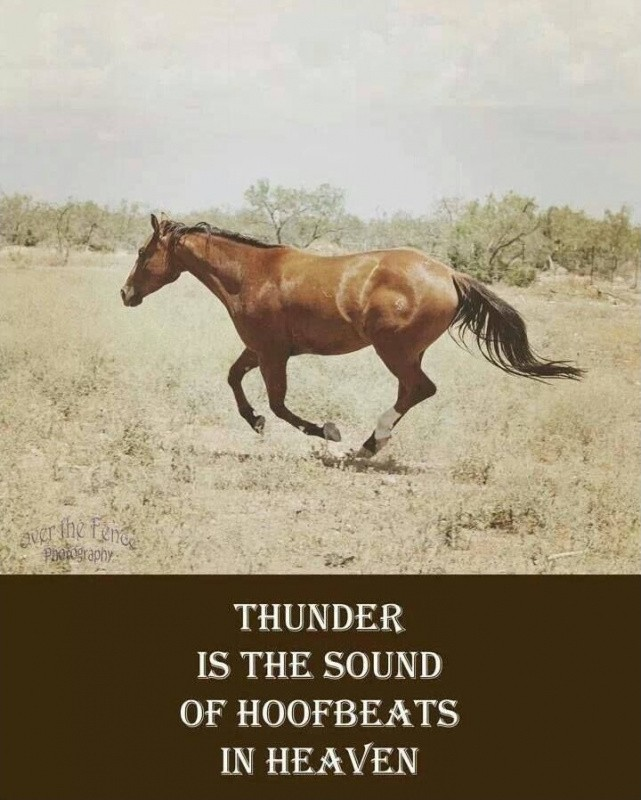 Horse Quote 12 Picture Quote #1