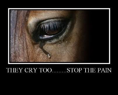 sad horse quotes