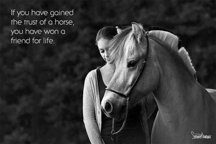 Greatest Horse Quote 1 Picture Quote #1