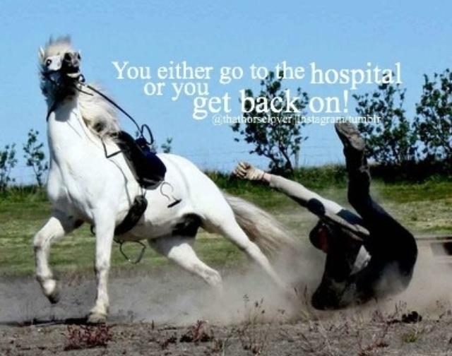 Horse Quote 15 Picture Quote #1