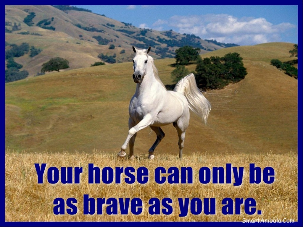 Horse Quotes | Horse Sayings | Horse Picture Quotes - Page 2