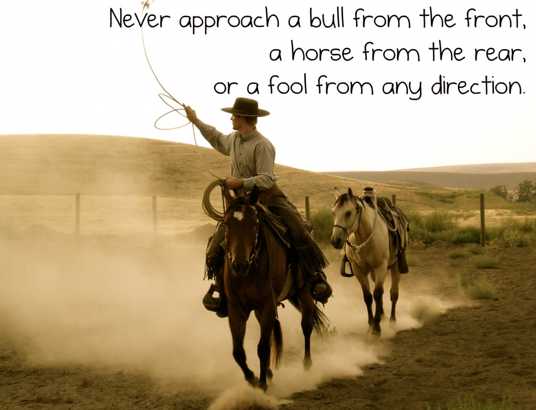 Horse Quote 20 Picture Quote #1