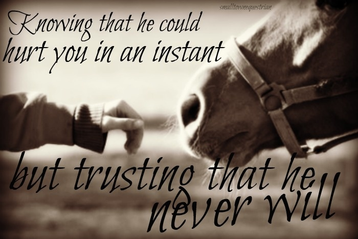 Horse Quote 27 Picture Quote #1