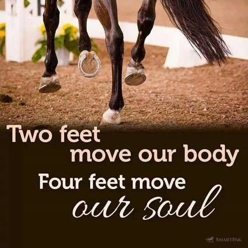 Horse Quote 30 Picture Quote #2