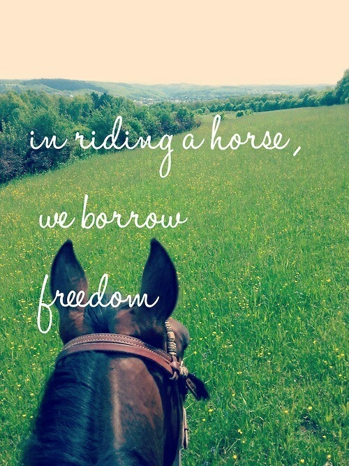 Horse Quote 34 Picture Quote #1