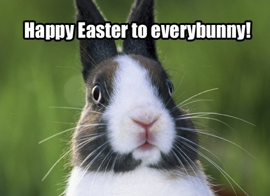 Funny Easter Quote Cute 1 Picture Quote #1