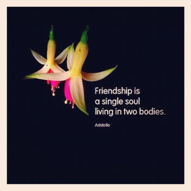 Cute Friendship Quote 6 Picture Quote #1