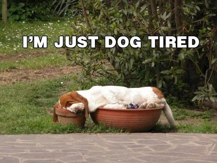 Dog Tired Quote 1 Picture Quote #1