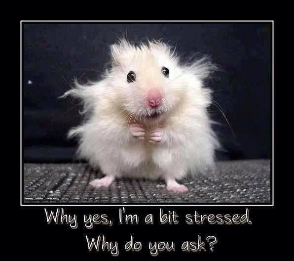 Too Much Stress Quote 1 Picture Quote #1