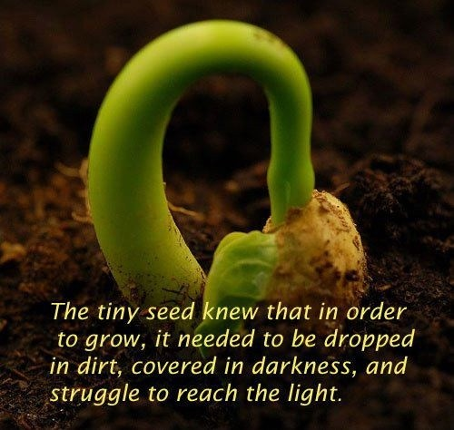 Personal Struggle Quote 3 Picture Quote #1