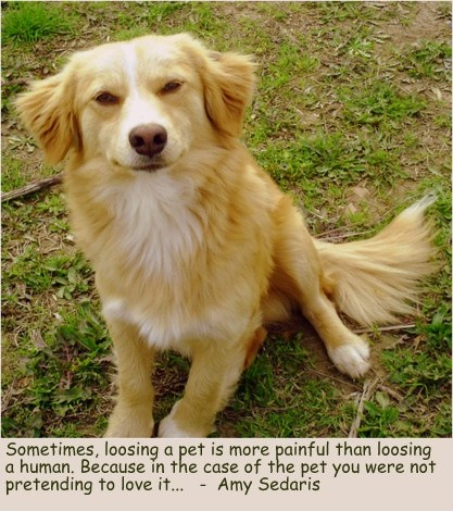 Dog Grief Quote 1 Picture Quote #1