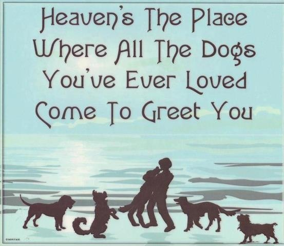 Dog Grief Quote 3 Picture Quote #1